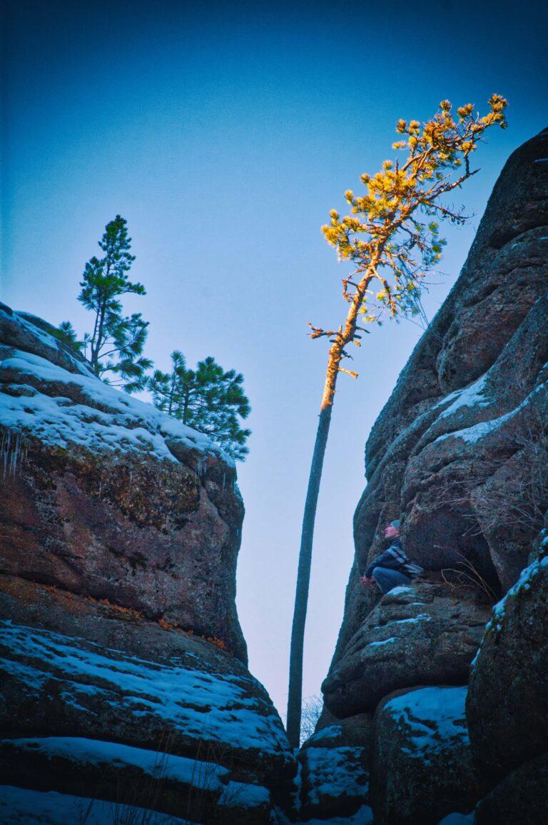 Одинокая сосна среди скал